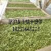 龙头机械——专业的蔬菜烘干设备提供商 椿根皮烘干机厂家