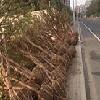 江苏靠谱的树木搬迁公司_苏州相城区挖树